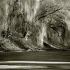 """R o c h o """"."""" (2007-07-17 21:55:01) komentarzy: 6, ostatni: kaskadami galezie splywaja jak woda..."""