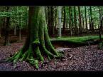 """YAsiek88 """"Mr Green"""" (2007-07-20 11:29:40) komentarzy: 19, ostatni: drzewacz...:-)"""