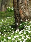 """Maciek Froński """"Wiosna w sadzie"""" (2007-07-24 20:24:17) komentarzy: 1, ostatni: było by fajnie gdyby nie ta fatalna ostrosć szczegulnie w górnej lewej części zdjecia! szkoda"""