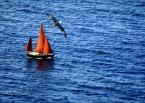 """Ciachee """"żegluj, żegluj ..."""" (2007-07-25 20:51:27) komentarzy: 0, ostatni:"""