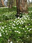 """Maciek Froński """"Wiosna w sadzie 2"""" (2007-07-31 20:31:19) komentarzy: 3, ostatni: wlasnie sie zastanawiam czy to u mnie sie cos posypalo ... ;-)"""