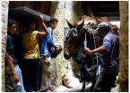 """ajsikel """"Fes al-Bali. W środku medyny."""" (2007-08-07 17:30:30) komentarzy: 7, ostatni: ależ u Ciebie ciekawych zdjęć przybyło od mojej ostatniej wizyty..."""