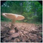 """invention """"* ( spod kapelusza, czyli: gdzie jest Żwirek )"""" (2007-08-14 12:03:26) komentarzy: 40, ostatni: shrooms"""