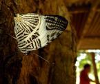 """radlis """"kuchnia, Rejes, Boliwia"""" (2007-08-17 14:18:35) komentarzy: 9, ostatni: niesamowity motyl, nie wiedziałam, że takie istnieją"""