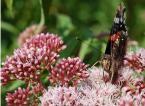 """leonek """"motylek"""" (2007-08-17 18:42:35) komentarzy: 3, ostatni: Wyb. ostre - pokazany w żywiole"""