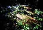 """xStraight Edgex """"Kirkuty Wrocławskie"""" (2007-08-19 01:08:20) komentarzy: 7, ostatni: Światło istotnie ciekawe, jednak warto było przygasic nieco polarkiem te odblaski na liściach.. :)"""