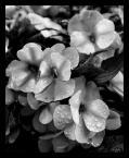 """nomadus """""""" (2007-08-19 14:24:17) komentarzy: 2, ostatni: to dla mnie te kwiatuszki? na urodzinki?? ;-P"""