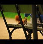 """Mopar """""""" (2007-08-21 23:38:12) komentarzy: 12, ostatni: wiewióra świetna ! :D :)) pozdrawiam :D +"""