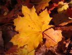 """leonek """"Barwy natury"""" (2007-08-25 21:33:48) komentarzy: 4, ostatni: ładne , cieplutkie kolorki ."""
