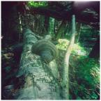 """invention """"* ( riddlesOfTheWood / 2 )"""" (2007-08-27 12:27:55) komentarzy: 4, ostatni: Leśny połamaniec z półpaścem :)"""
