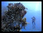 """kivaki """"Mgławica Poseidona"""" (2007-08-30 10:53:04) komentarzy: 27, ostatni: Maxio. Jakbym miał coś skkrytykować, to to jaką sytwetkę ten nurek trzyma, ale to już nie Twoja wina ;)"""
