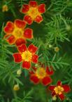 """slavcic """"Kwiatowo"""" (2007-08-31 11:40:24) komentarzy: 20, ostatni: Świetna kompozycja"""