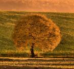 """Steven M. """"Golden Tree."""" (2007-08-31 19:51:42) komentarzy: 82, ostatni: piękne!"""