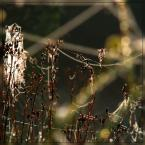"""Ravkosz """"uniesienia ... #6"""" (2007-09-03 20:12:55) komentarzy: 31, ostatni: Fajnie to wszystko podświetlone :)..."""