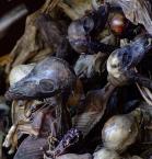 """radlis """"upadłe lamy #3"""" (2007-09-06 01:24:33) komentarzy: 13, ostatni: niesamowite...moze je jeszcze jedzą?!"""