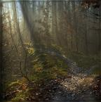 """Ravkosz """"jesień malowana #1"""" (2007-09-10 20:14:48) komentarzy: 55, ostatni: cala seria swietna"""