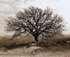"""Ilona Budzbon """"drzewo życia ...."""" (2007-09-11 15:18:44) komentarzy: 28, ostatni: fajny klimat, bardzo mi się podoba."""
