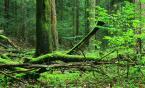 """rybka_ """"Bukowa Góra"""" (2007-09-11 16:41:34) komentarzy: 2, ostatni: Ładny kawałek lasu. Pierwszy plan, jak dla mnie, mógłby być ostrzejszy"""