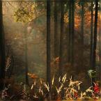 """Ravkosz """"jesień malowana #2"""" (2007-09-14 19:29:21) komentarzy: 66, ostatni: świetnie :)"""