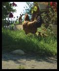 """arche """"ciekawostka"""" (2007-09-18 23:20:28) komentarzy: 30, ostatni: czekam na wiecej!"""