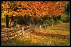 """Tomasz Stawowy """"a w Beskidzie jesień..."""" (2007-09-21 23:59:35) komentarzy: 56, ostatni: Piękne światło !"""