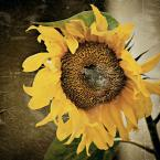 """CLaritine """"słonecznie..."""" (2007-09-24 11:13:17) komentarzy: 4, ostatni: lcd"""