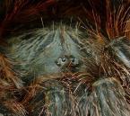 """radlis """"oczy w oczy 2"""" (2007-09-24 23:34:52) komentarzy: 3, ostatni: swietne uwielbiam pajaki"""