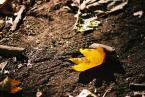 """milkshake """"liść żółty"""" (2007-09-26 20:29:05) komentarzy: 2, ostatni: bdb"""