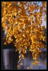 """andrzejj """"**********"""" (2007-09-27 20:59:19) komentarzy: 5, ostatni: Piękne kolory i piękny kontrast. Ładnie."""