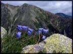 """1852m """"W Tatrach"""" (2007-09-28 22:09:30) komentarzy: 6, ostatni: klasyczne, jednak wpada w oko"""