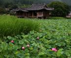 """Willie Sunday """"Lotus pond"""" (2007-10-02 06:22:33) komentarzy: 16, ostatni: mmm, aż się chce zanurzyć w te lotosy.."""