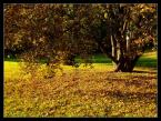 """Karol Z. """"Kolory Jesieni w Parku Szczytnickim"""" (2007-10-02 09:00:06) komentarzy: 45, ostatni: ... piękna ale smutna pora roku ;-)"""