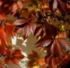 """Kusznik """"jesiennie jest"""" (2007-10-04 20:36:50) komentarzy: 10, ostatni: Wkręca w jesień! Rewelacja! czy to krop z fisiaja?"""