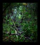 """Rafal """"MoVeR"""" Machelski """"las"""" (2007-10-04 23:35:57) komentarzy: 9, ostatni: dobrze by było się tam zaplątać:)"""
