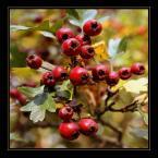 """Yeto """"Jesień"""" (2007-10-05 20:20:34) komentarzy: 3, ostatni: fajne"""