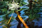 """kiki123 """"Wodą malowane.."""" (2007-10-10 02:21:54) komentarzy: 9, ostatni: a mi sie podoba :)"""