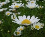 """Frotka """"takie kwiatki"""" (2007-10-10 11:49:57) komentarzy: 11, ostatni: przyjemne...pozdr.]"""