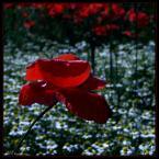 """beige """"okno z widokiem..."""" (2007-10-10 21:16:10) komentarzy: 26, ostatni: Super. Kadr  i wykonanie DUZY +. Podoba się tło tło w oddali."""