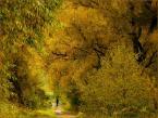 """Wołodytjowski """"W złoto oprawiona"""" (2007-10-10 22:07:45) komentarzy: 15, ostatni: pięknie"""