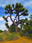 """i_koniec """"joshoua"""" (2007-10-12 21:44:44) komentarzy: 5, ostatni: drzewki joshua, fajny okaz"""