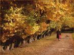 """koszmar69 """"Piękny i ważny dzień - 21.10.2007r."""" (2007-10-21 21:23:24) komentarzy: 14, ostatni: ładnie ujęte, aż chce się iść na spacer ;)"""