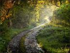 """Wołodytjowski """"Jesienna droga o poranku"""" (2007-10-21 22:56:31) komentarzy: 42, ostatni: Świetnie złapany magiczny klimat lasu."""