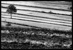 """Ikolka """"Krajobraz w paski"""" (2007-10-28 08:59:13) komentarzy: 14, ostatni: świetne te pasiaki!"""