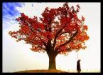 """Mayrah """"Życie to bajka ... a reszta to sen ..."""" (2007-10-28 20:49:12) komentarzy: 49, ostatni: wymiata???? dzięki ;))"""