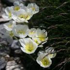 """Michelle """" na tarzańskich ścieżkach..."""" (2006-07-14 17:40:03) komentarzy: 8, ostatni: wiosennie ...:)"""