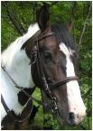 """mariol """"koń i pies"""" (2006-07-16 15:19:58) komentarzy: 7, ostatni: Generalnie niprzepadam za srokaczami ale tego ładnie uchwyciłaś;-)"""