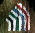 """ziczak """"W cztery świata kolory"""" (2006-07-23 08:56:46) komentarzy: 5, ostatni: ruch czteropasmowy ;)"""