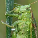 """Slawcio1 """"Pasikonik zielony"""" (2006-08-05 19:20:20) komentarzy: 32, ostatni: rewelacyjne makro. detale i w ogóle. ;)"""
