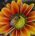 """Frotka """"wiosna tuz tuz-)"""" (2006-08-28 12:43:28) komentarzy: 24, ostatni: sympatyczna praca.."""