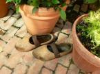 """HOJA 104 """"buciczki ogrodniczki"""" (2006-08-29 20:16:06) komentarzy: 6, ostatni: no fajny klimat! :)"""